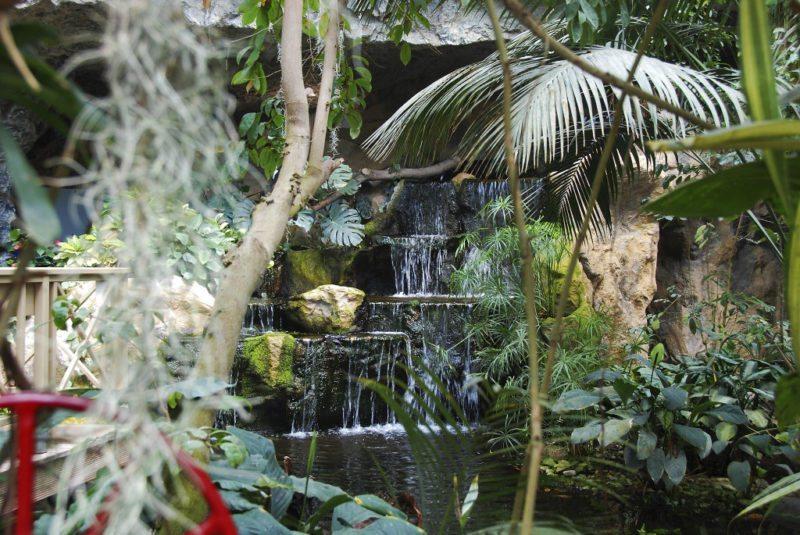 Exotische Pflanzenpracht in den Blumengärten Hirschstetten!